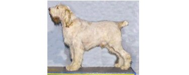 CH Epithelium Elia, 2006 Best of Breed
