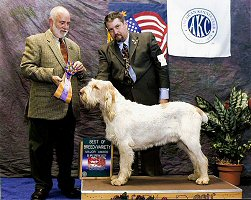 Son Couchfield Poderi at 1½ - Best of Breed Big Apple Sporting Show