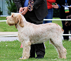 2013 National Specialty Best of Breed: