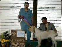 Elia & son Couchfield Poderi - 2006 Specialty Day 2 Best of Breed